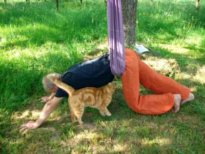 Hund Rutscht Mit Po Auf Boden